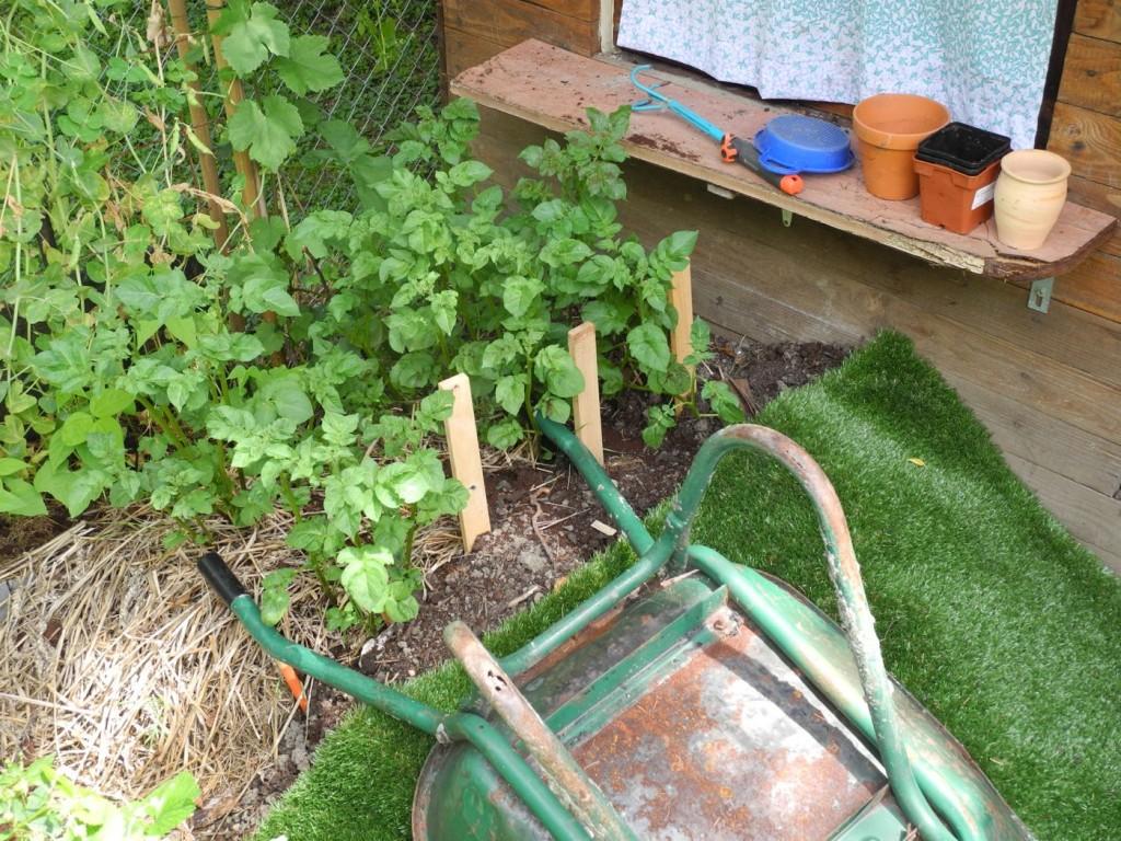 kartoffeln anpflanzen lebensraum permakultur. Black Bedroom Furniture Sets. Home Design Ideas