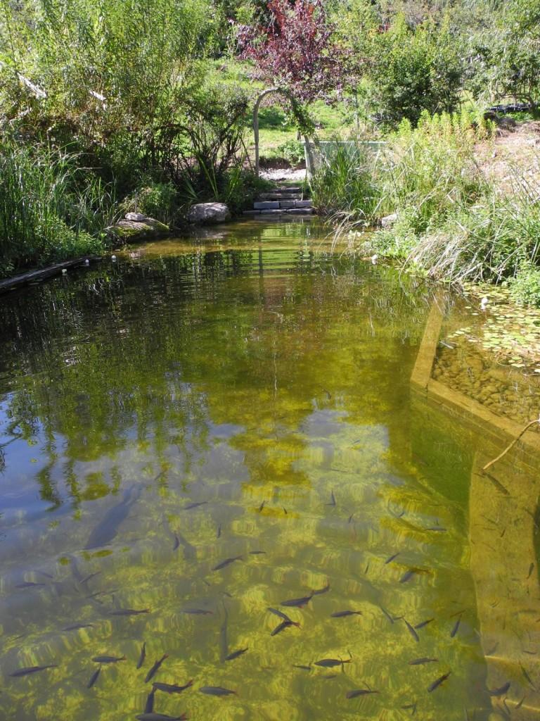 Schwimmteich lebensraum permakultur for Schwimmteich