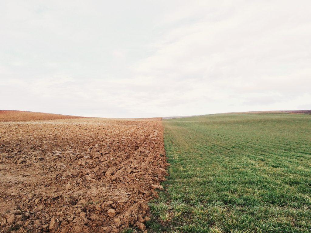 farmland-801817