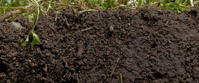 healthy_soil.jpg__1500x670_q85_crop_subsampling-2