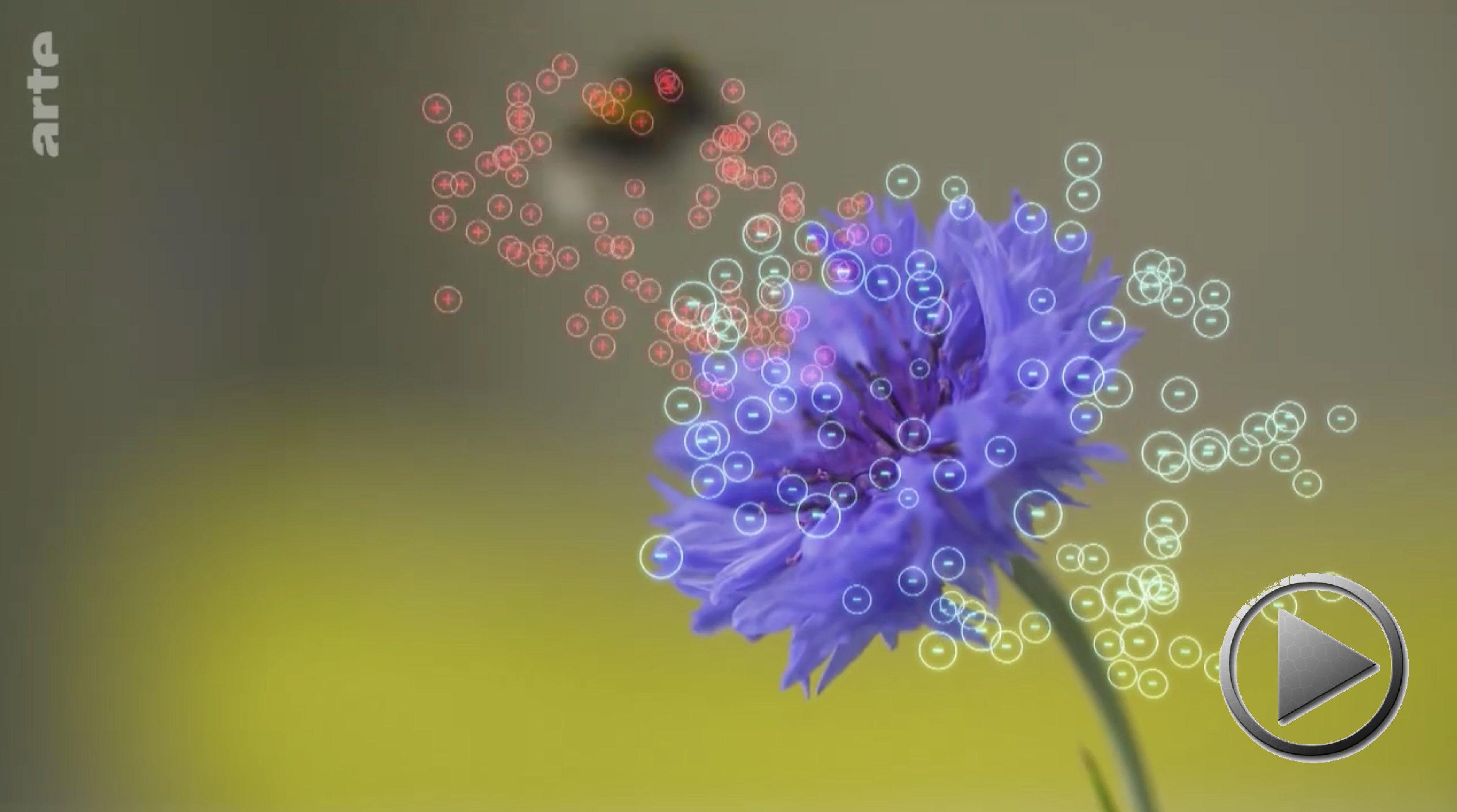 Doku: Flower Power – Energie aus Blumen