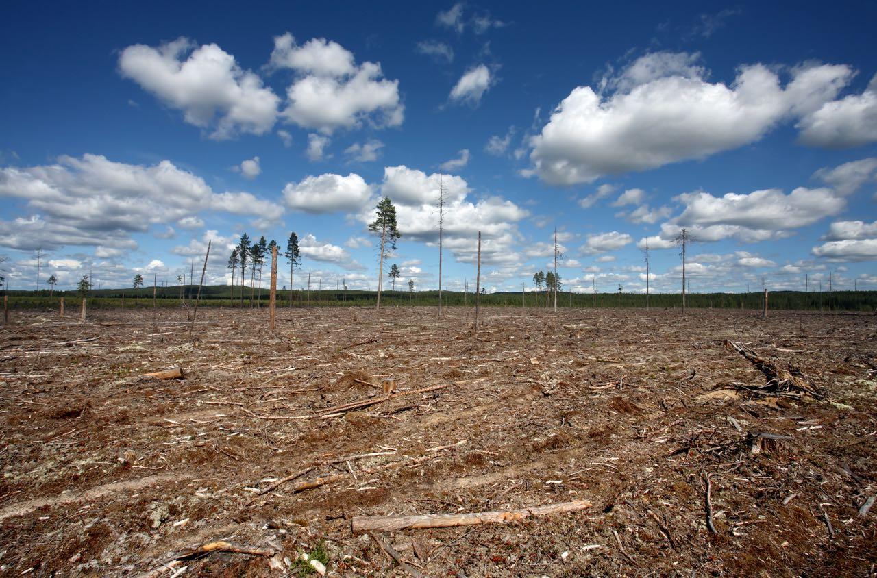 Artikel: Forscher warnen vor Ökosystem-Kollaps innerhalb von Jahrzehnten