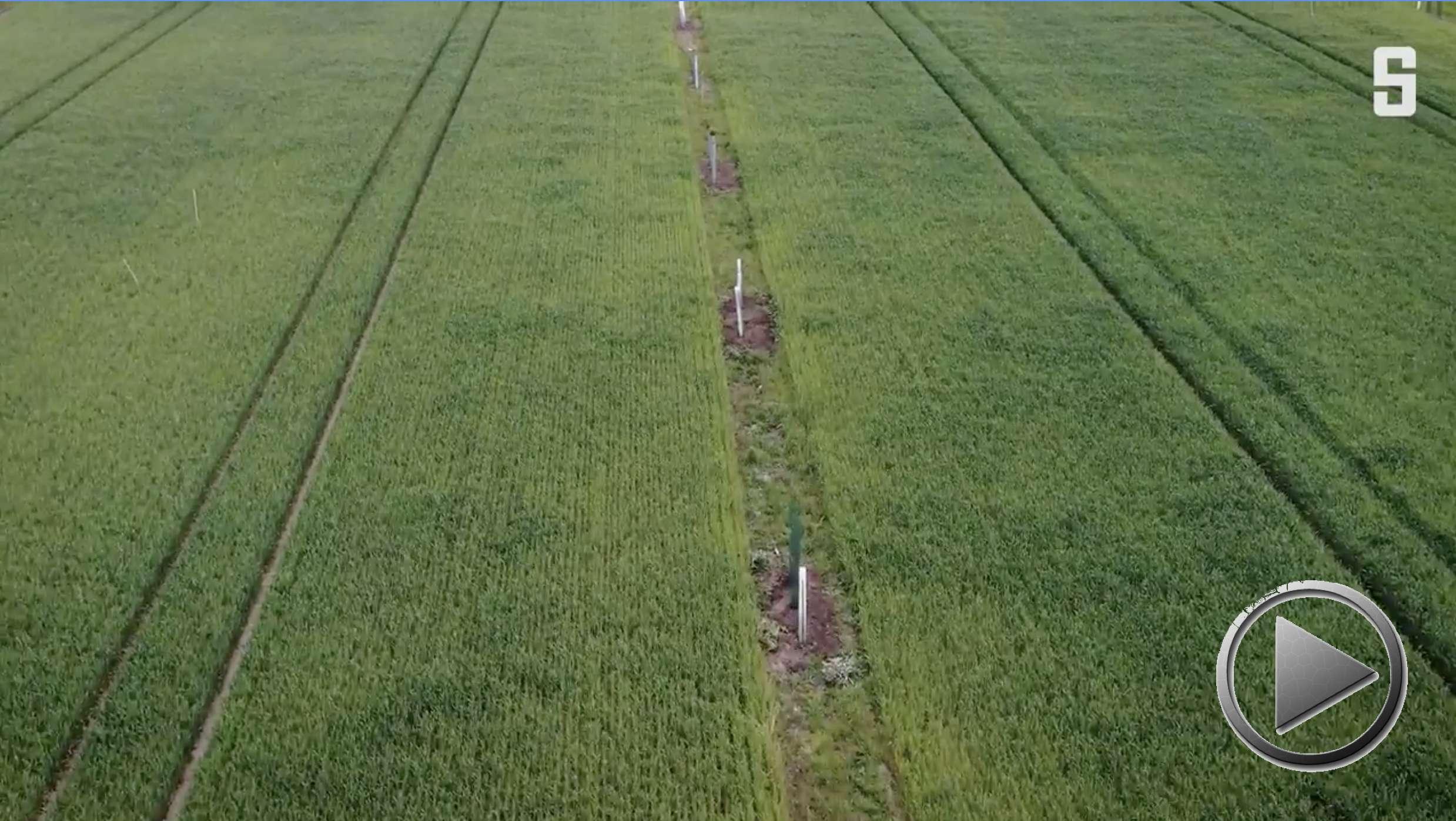 Video: Agroforstwirtschaft auf SpiegelOnline