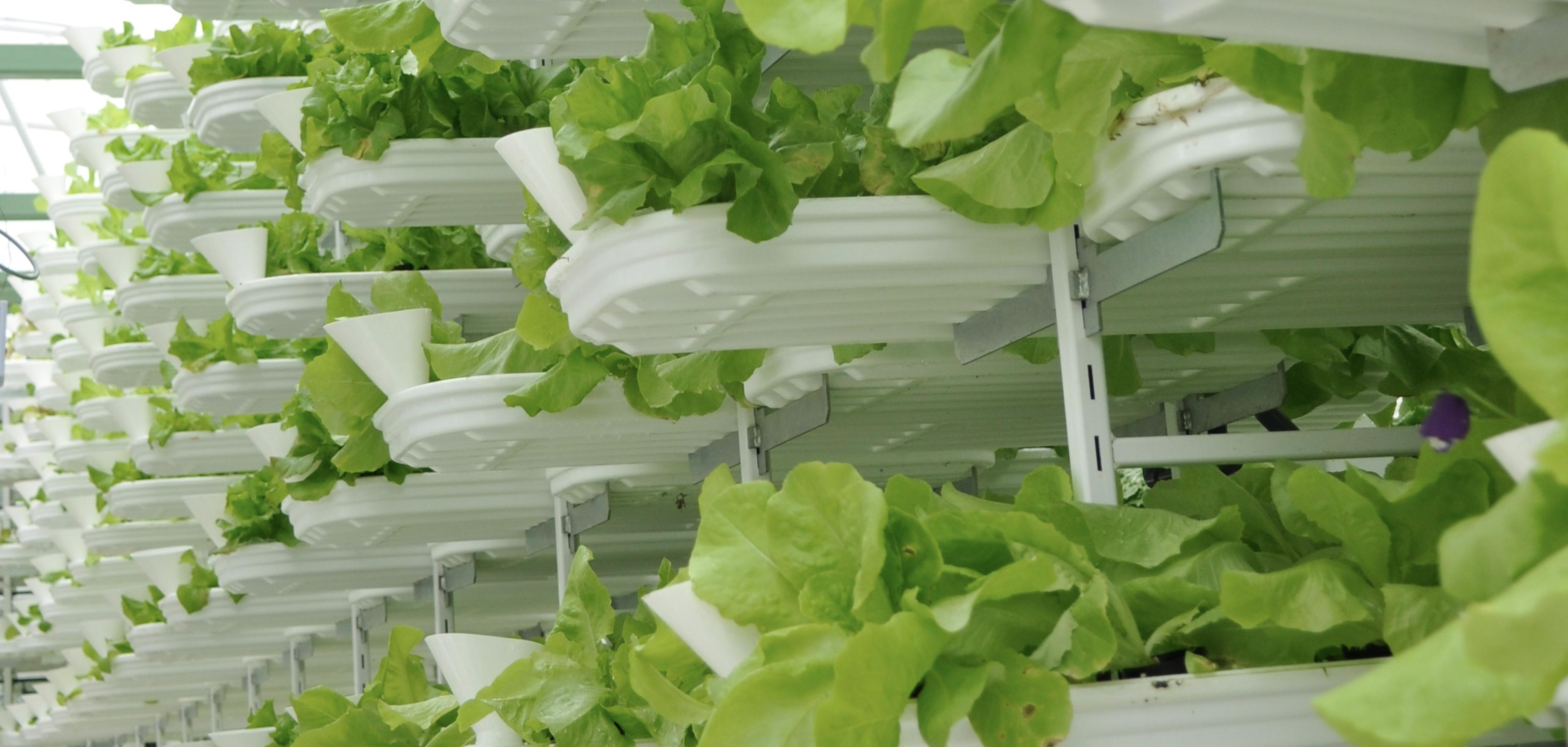 Artikel: Agrargeschichte – Wie die Farm zur Fabrik wurde