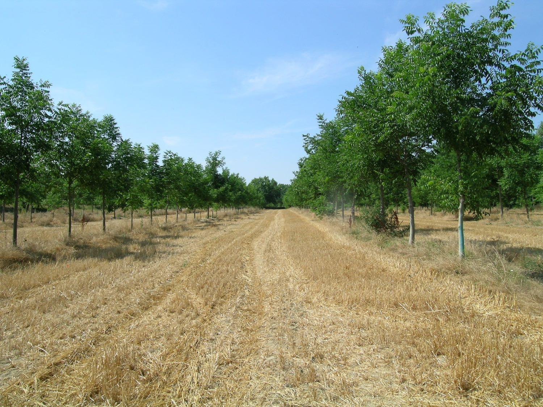 Artikel: Agroforstwirtschaft. Den Wald aufs Feld holen