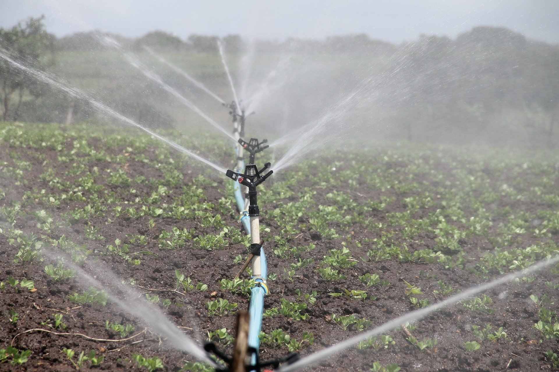 Wasser-Diebstahl in der Landwirtschaft – ein globales Problem