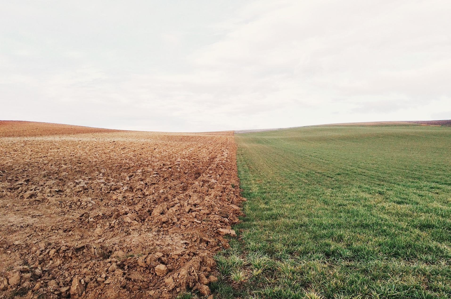 Internationaler Währungsfonds: Warum nachhaltige Lebensmittelsysteme in einer Post-COVID-Welt notwendig sind
