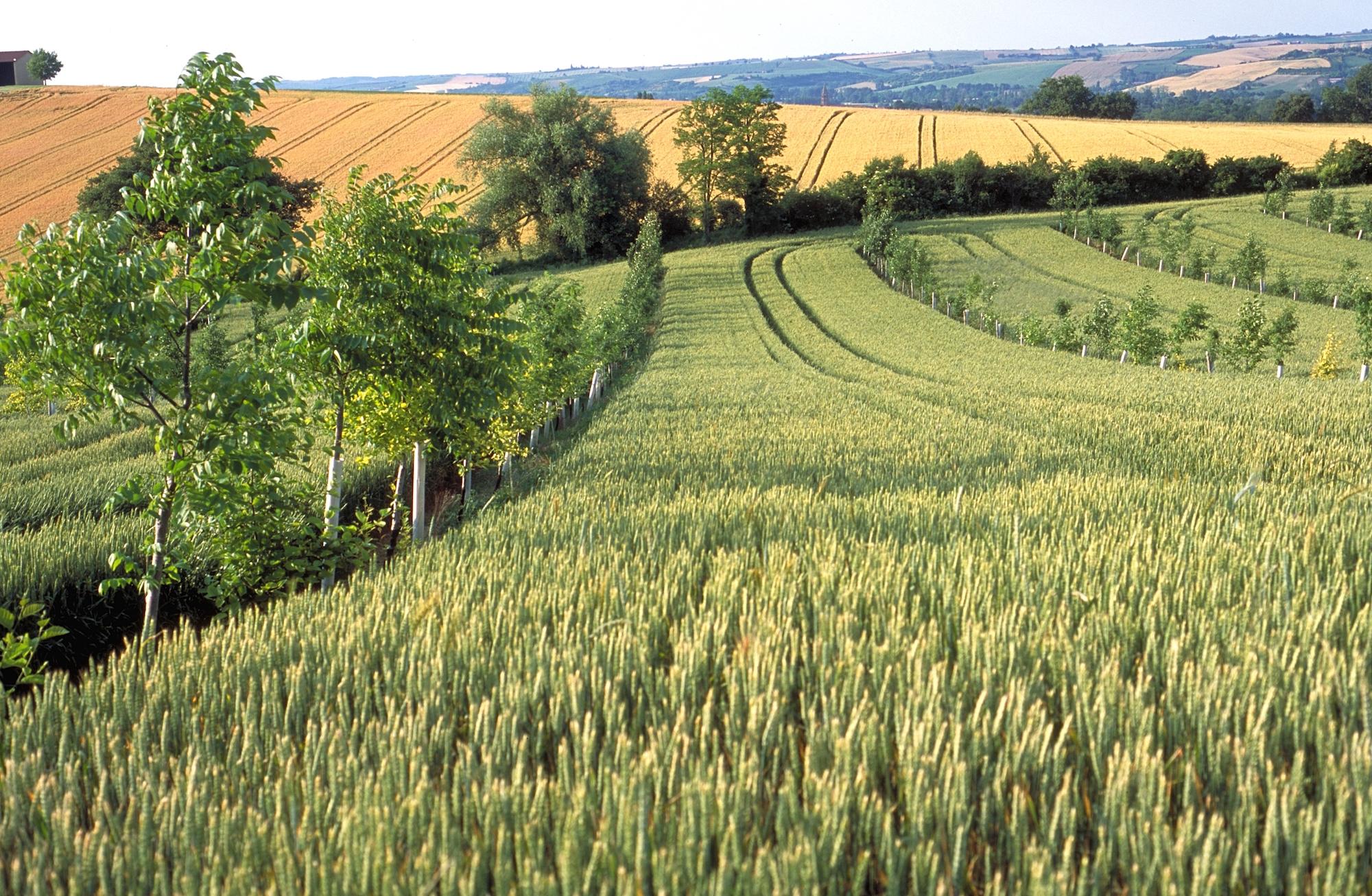 """6. Webinar-Reihe """"Aufbauende Landwirtschaft"""". 7 Webinare – 7 Praktiker berichten. Schwerpunkt »Wasser«"""