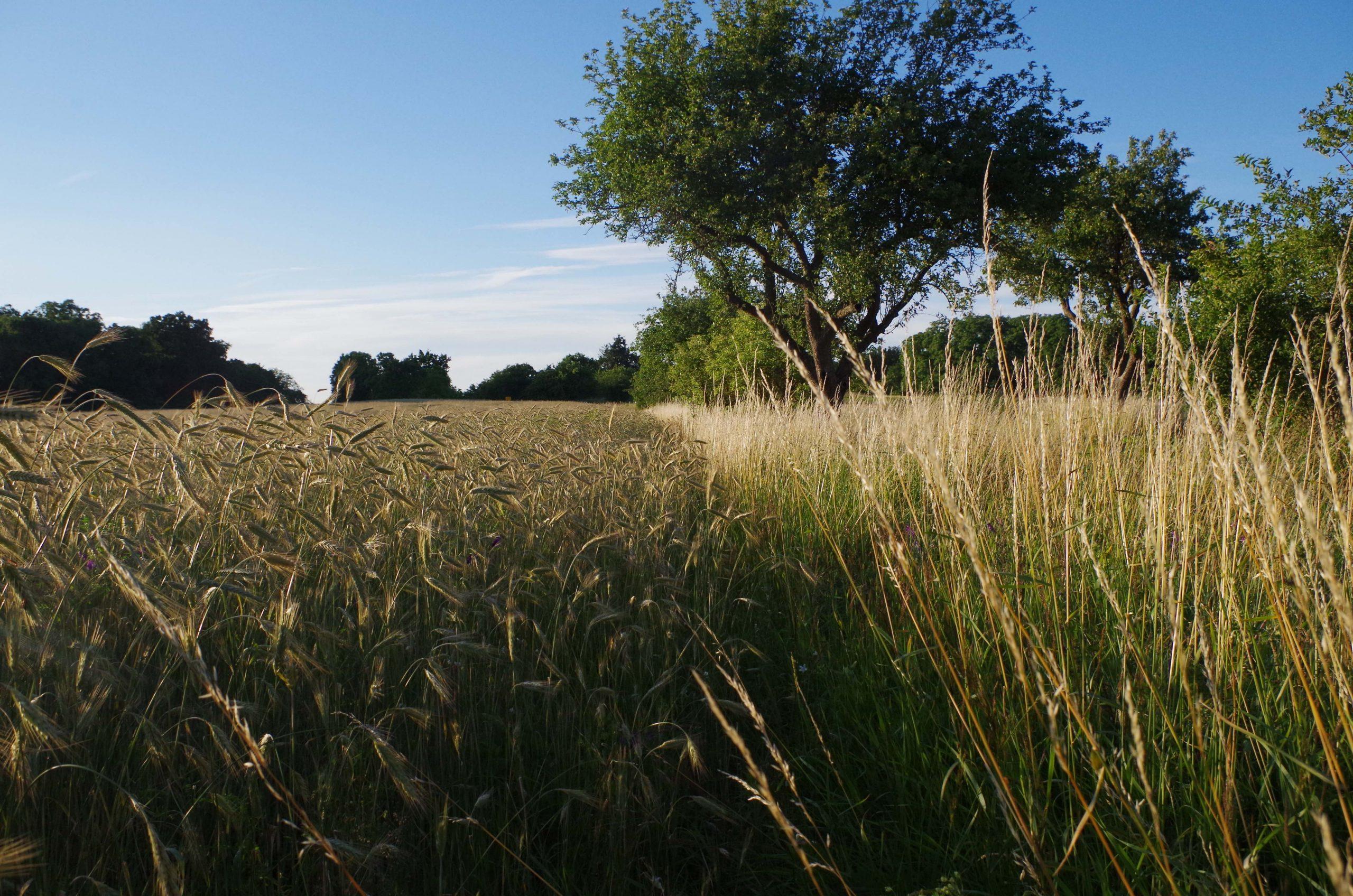 """Morgen in der 6. Webinar-Reihe """"Aufbauende Landwirtschaft"""":  Paul Hofmann & Olef Koch – Natürliches Wassermanagement mit Agroforstwirtschaft"""