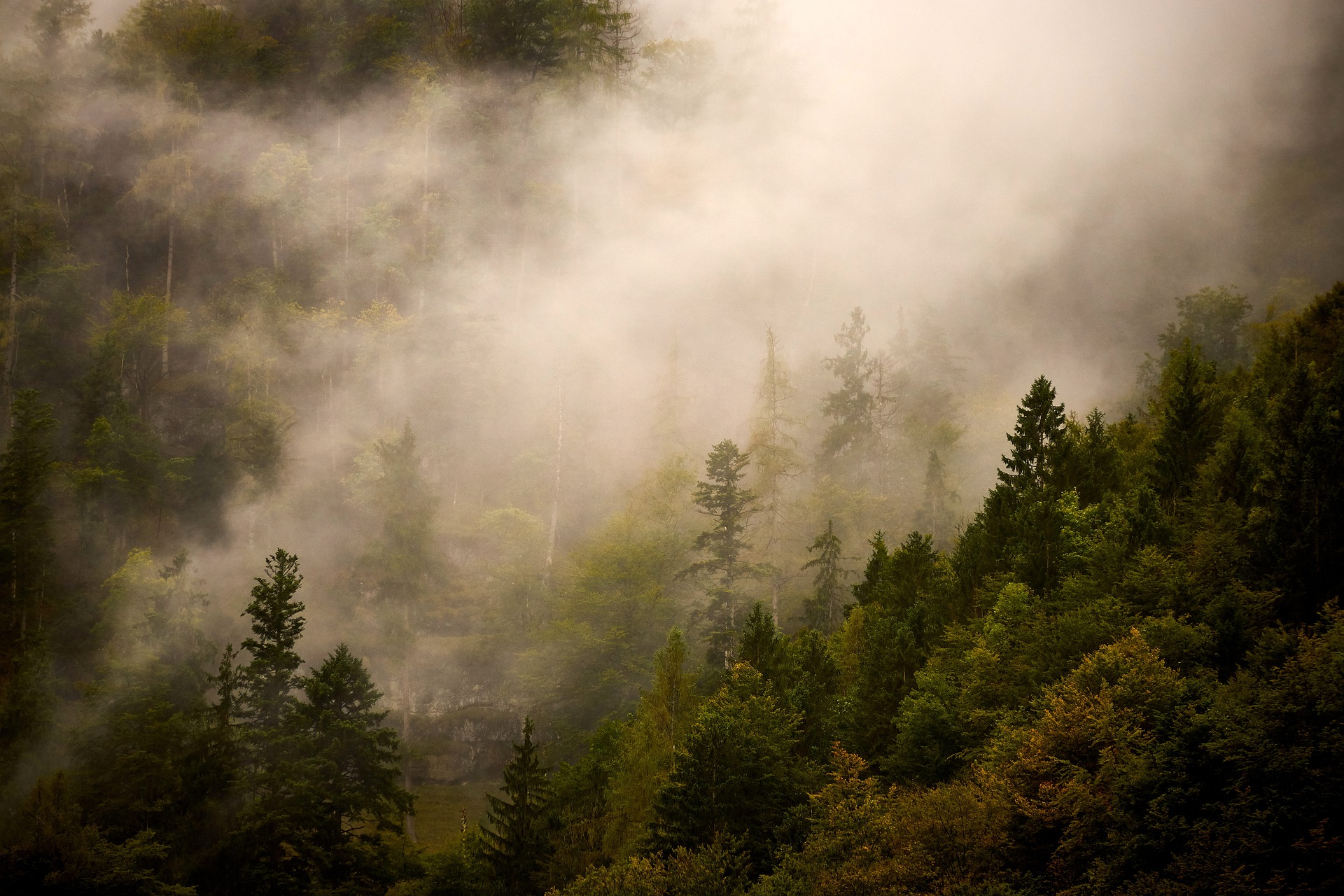 Artikel: Mehr Wälder in Europa könnten für mehr Niederschläge sorgen