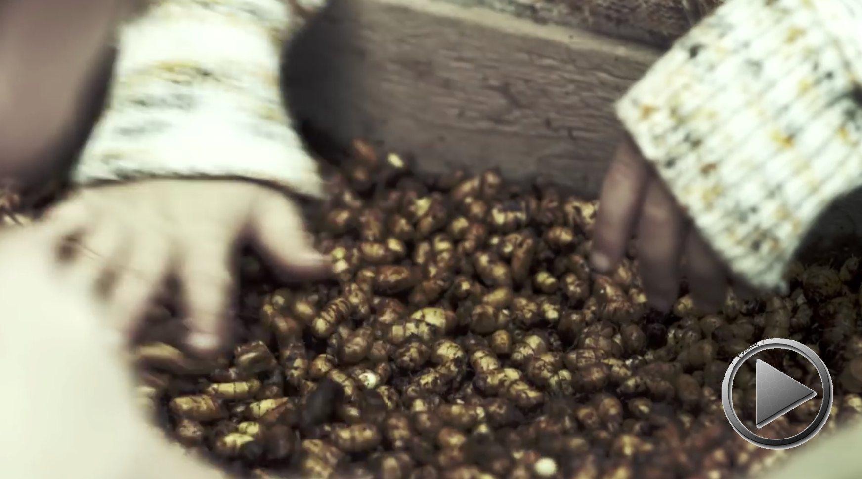 Doku: Der Saatzieher – Altes Wissen, neue Landwirtschaft