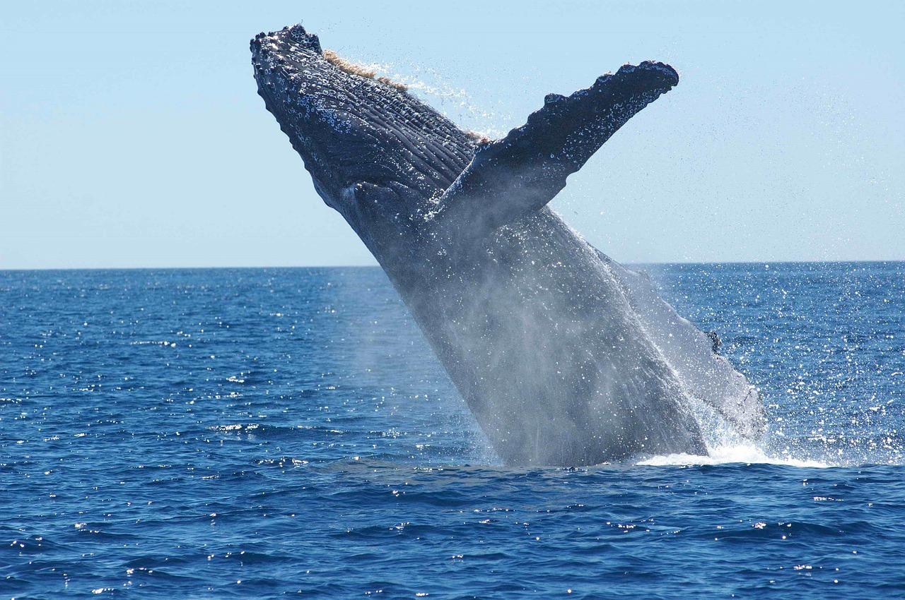 »Vermehrt die Wale« statt »Pflanzt Bäume«