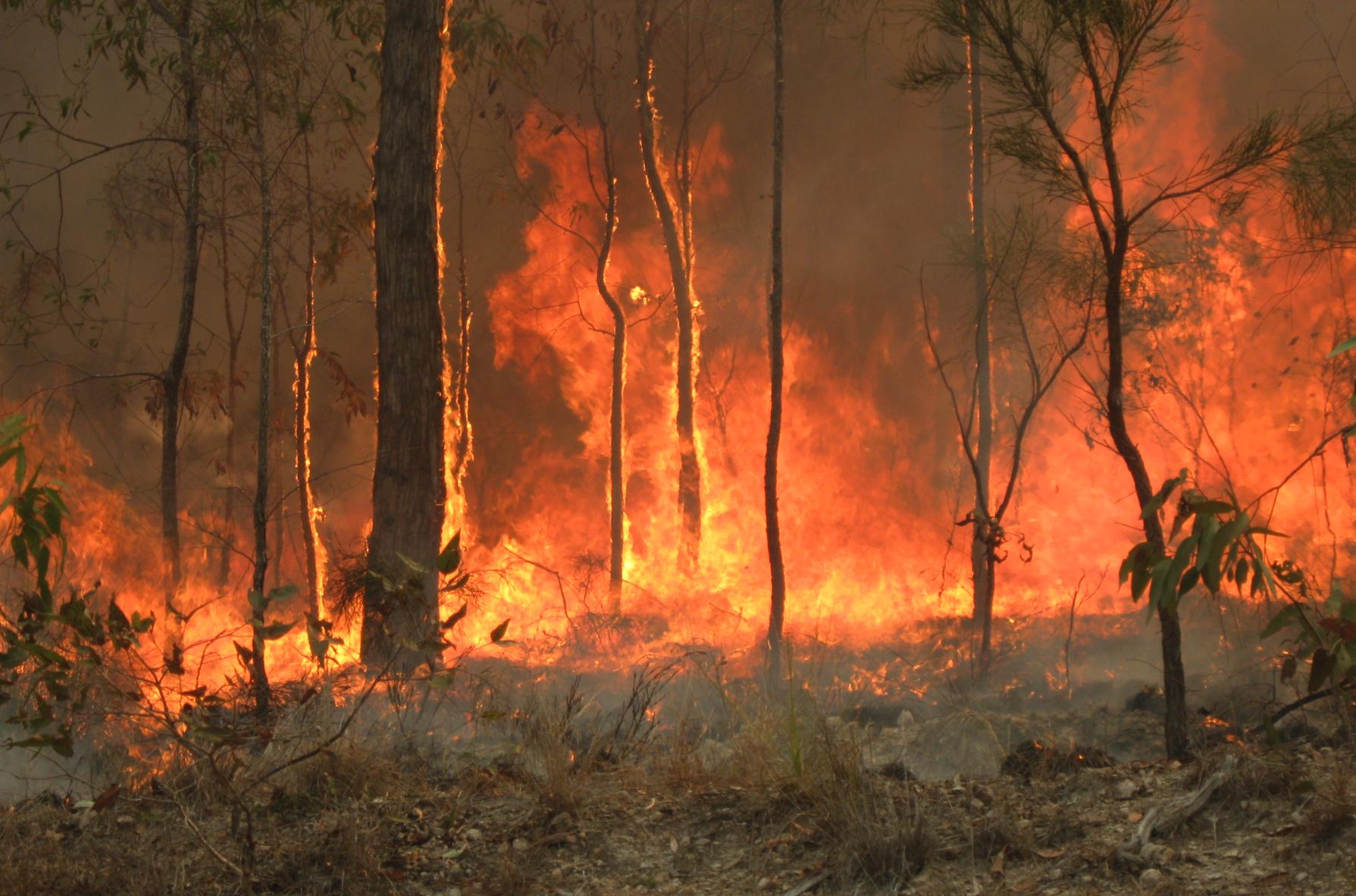Buschfeuer in Australien treiben CO2-Emissionen deutlich in die Höhe