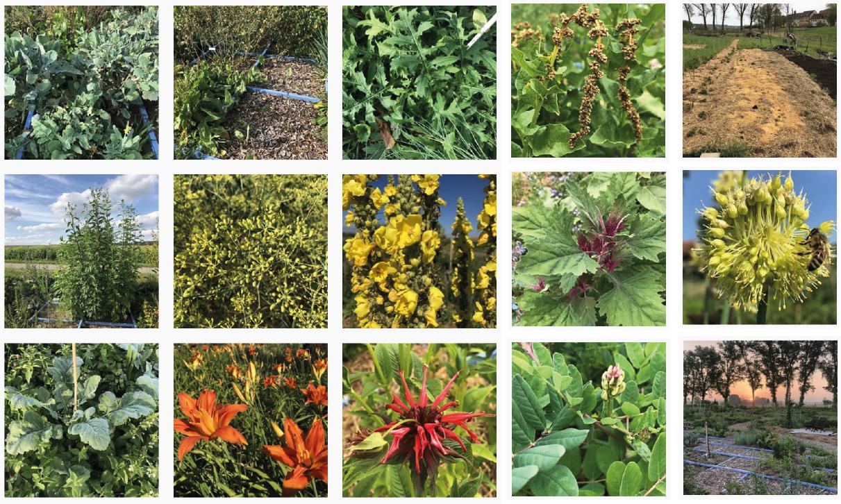 Mein »essbarer Waldgarten« Blog