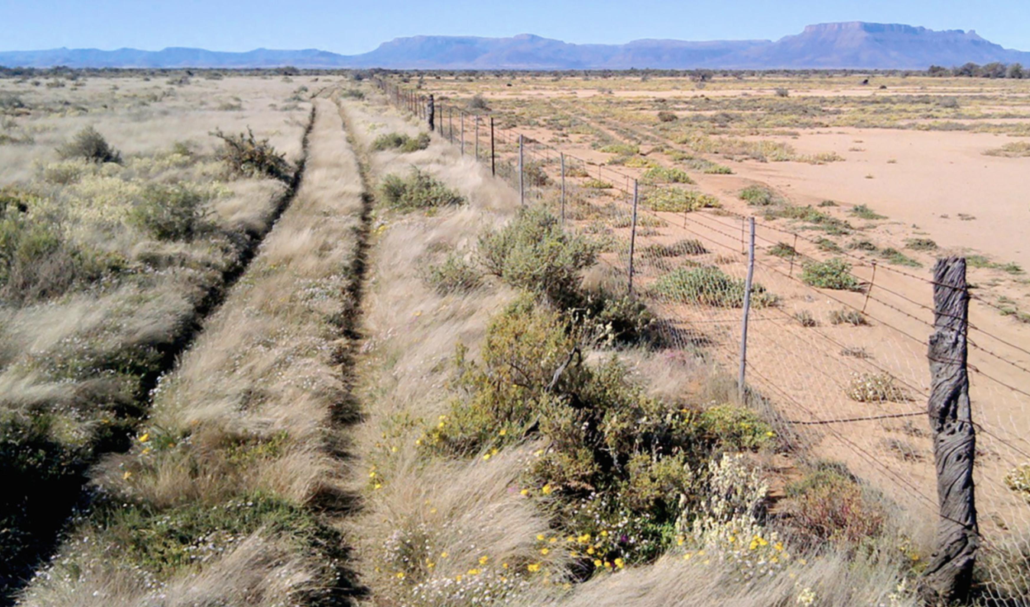 Artikel: Holistisches Weidemenanagement – Eine Blaupause für die Kühlung der Erde. Charles Massy. Australien