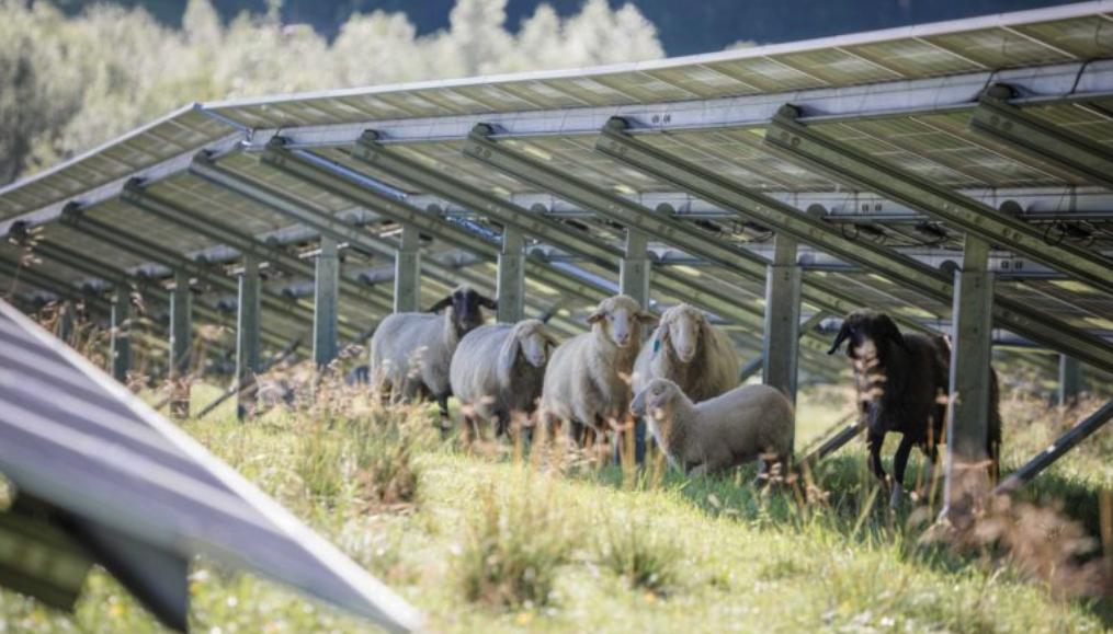 Solarkraftwerk mit Schafen und Ackerbau