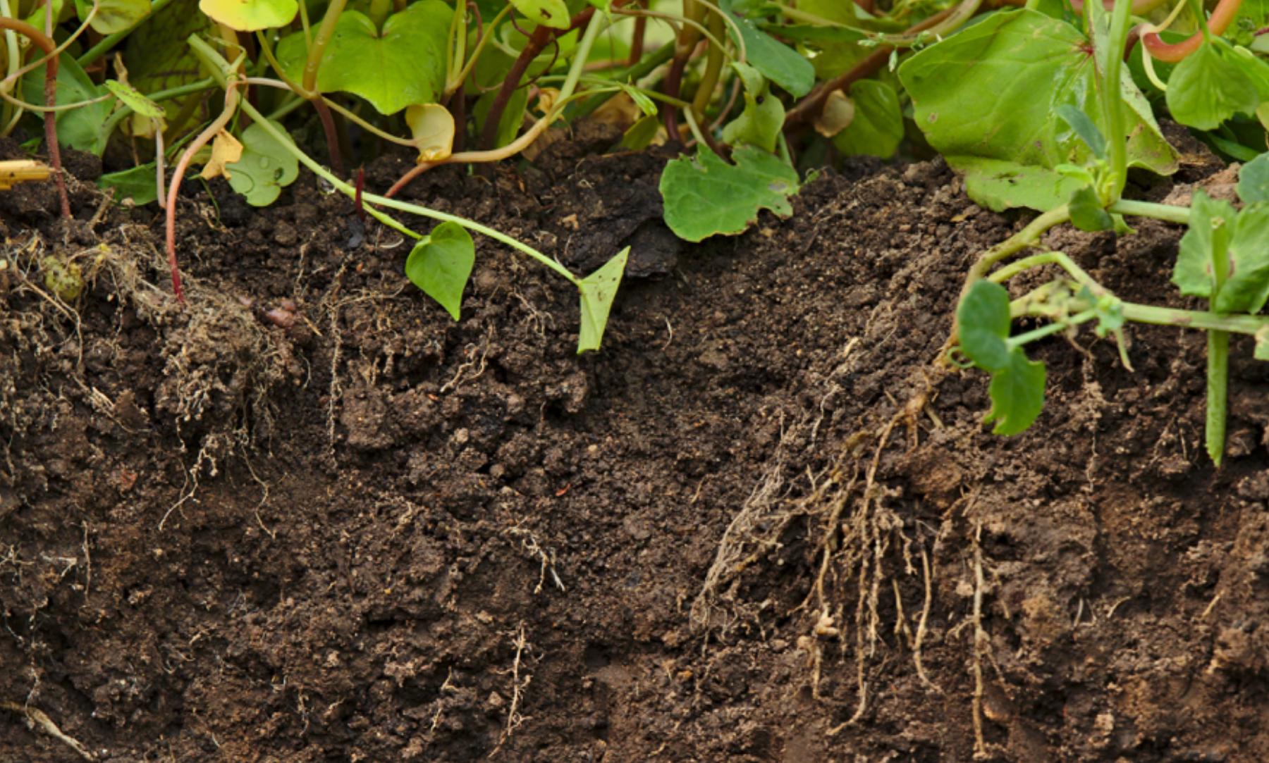 Amerikanischer Landwirt erhält 115.000$ für CO2-Zertifikate – eine gute oder eine schlechte Nachricht?