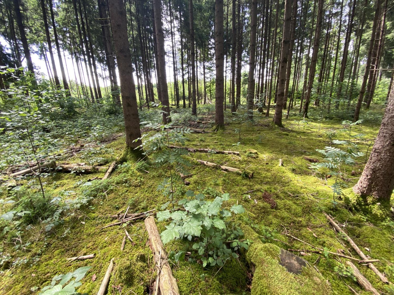 Ludwig Pertl mit dem Deutschen Waldpreis Kategorie »Nachhaltigkeit« ausgezeichnet