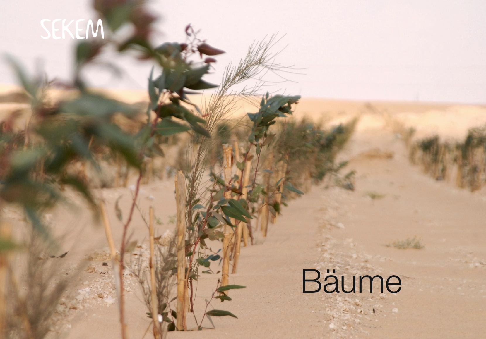 """Heute in der 6. Webinar-Reihe """"Aufbauende Landwirtschaft"""": Helmy Abouleish. SEKEM – das Wunder in der Wüste"""